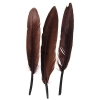 "Duck Wing Quill 3-4"" Brown"
